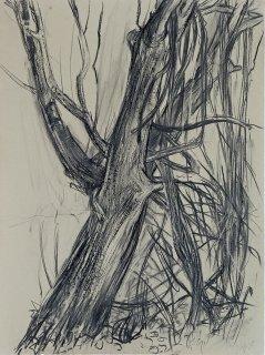 Waldrebe am Baum, Anita Voigt
