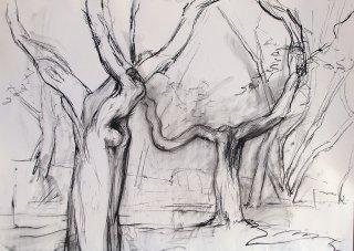 Alte Bäume von Ferrano, Anita Voigt
