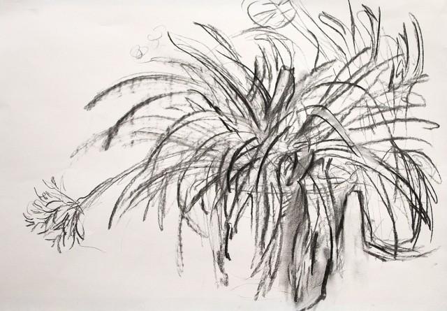 Anita Voigt: zwei Pflanzen