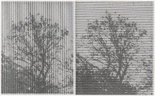 Waldstück, Friedrich Fröhlich