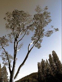 Baum in Butchart Garden 2, Sascha Bernard