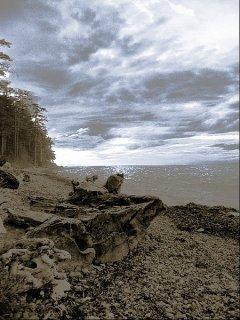 Baum am blauen Strand, Sascha Bernard
