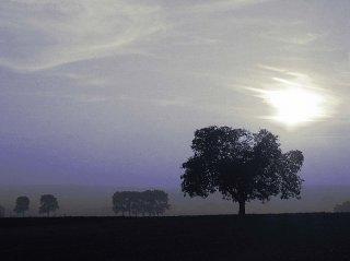 blauer Horizont mit Baum, Sascha Bernard
