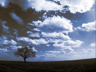 Baum mit blauen Wolken, Sascha Bernard