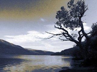 Baum am See, Sascha Bernard