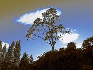 Baum in Butchart Garden 1, Sascha Bernard