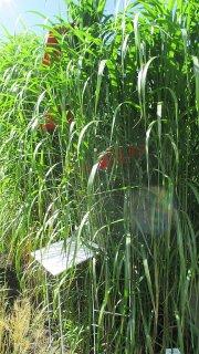 Wachstum / in Pflanzengesellschaft , Anett Simon