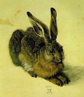Junger Feldhase, Albrecht Dürer